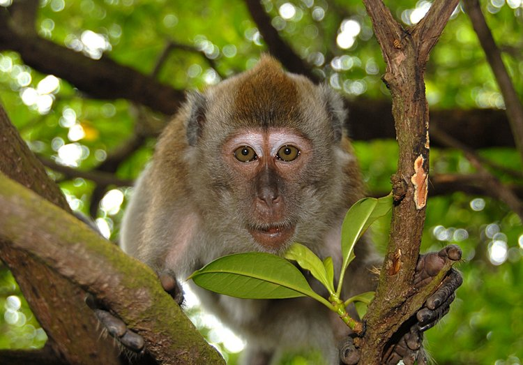 small/dec_03_0904_monkey_face.jpg