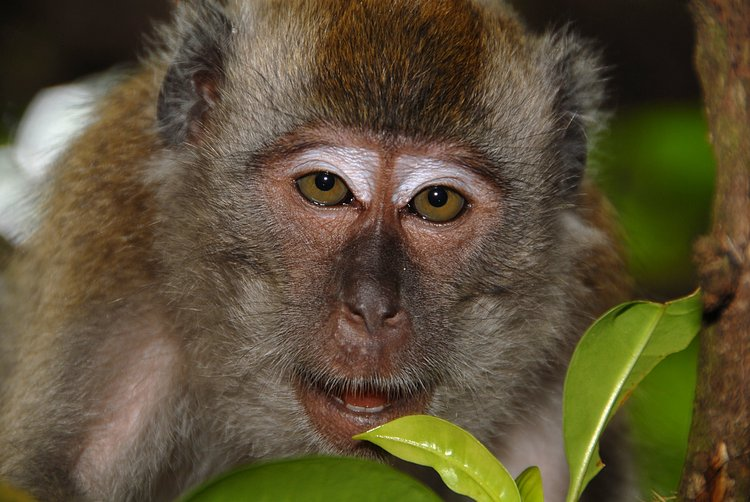 small/dec_03_0905_monkey_face.jpg