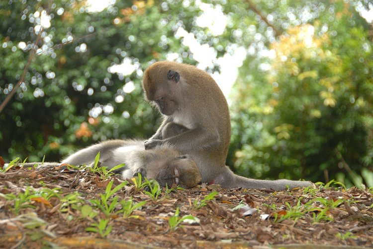 small/dec_03_0909_monkey_grooming.jpg