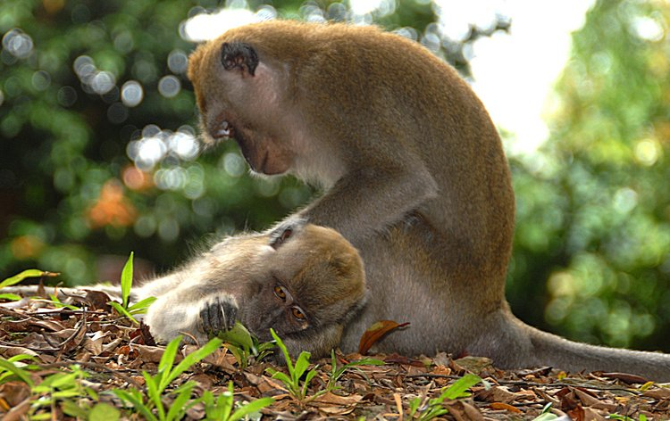 small/dec_03_0918_monkey_grooming.jpg