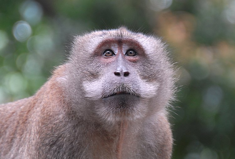 small/dec_03_0938_monkey_face.jpg