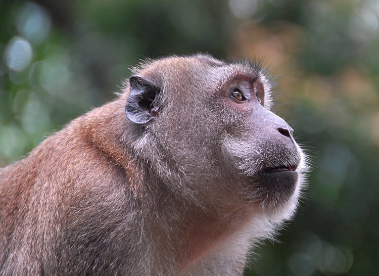 small/dec_03_0939_monkey_ear.jpg