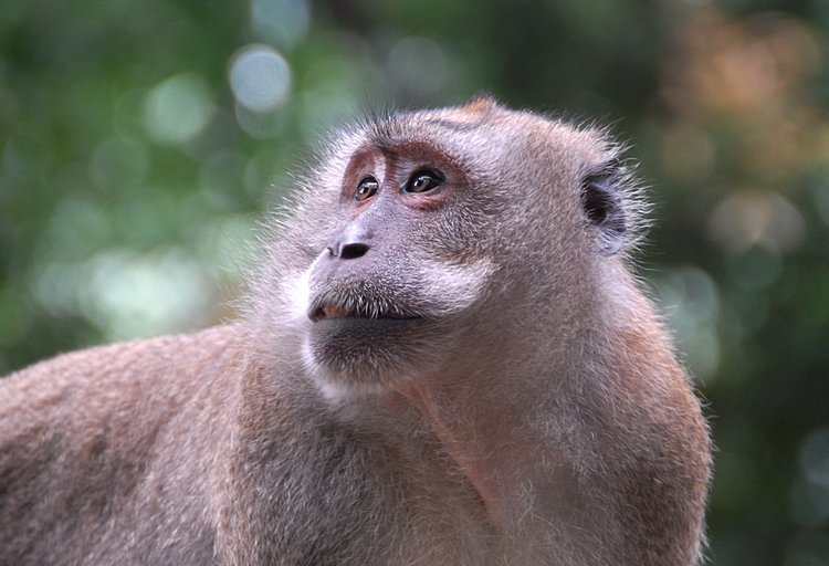 small/dec_03_0944_monkey_look.jpg