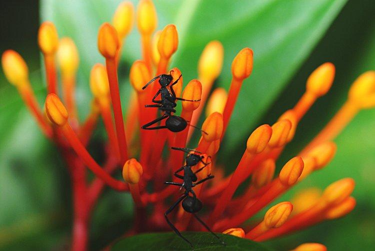 dec_09_1243_2_ants.jpg