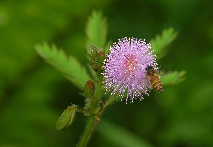 dec_27_1760_flower_bee.jpg