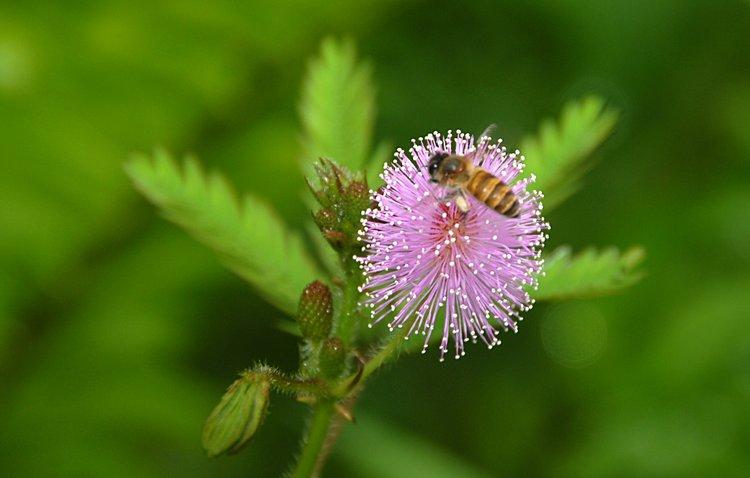 dec_27_1761_bee_flower.jpg