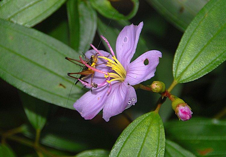 dec_27_1770_flower_hopper.jpg