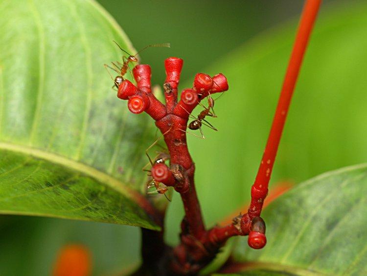 dec_29_2636_red_ants.jpg