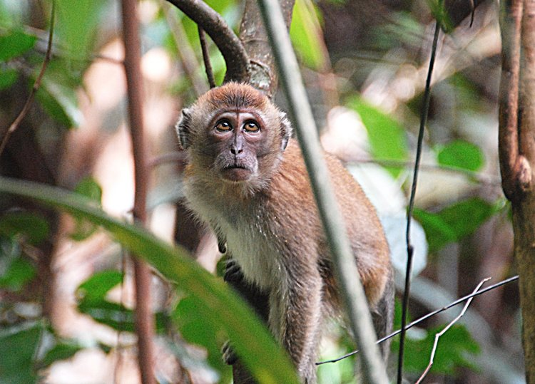 dec_29_2714_monkey.jpg