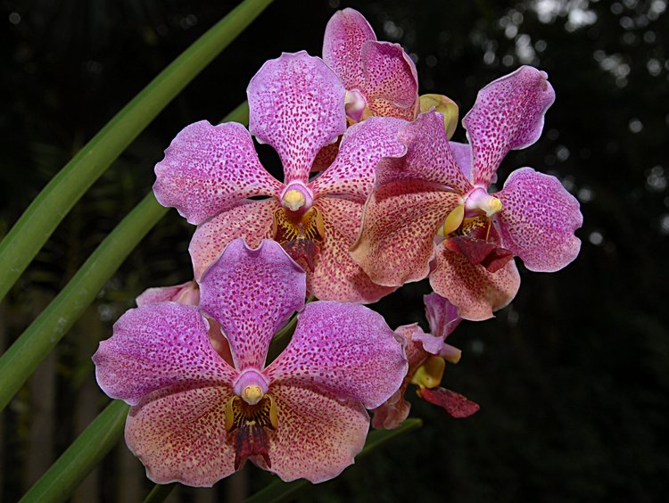 jan_02_3609_orchid.jpg