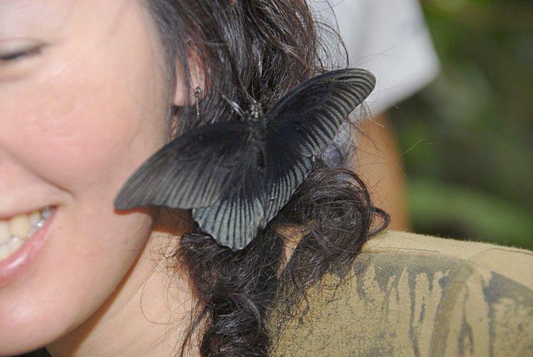 jan_02_3663_butterfly_lady.jpg