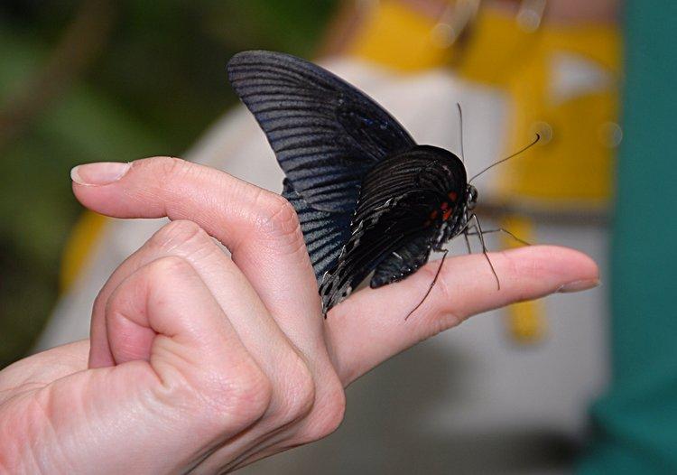 jan_02_3670_black_butterfinger.jpg