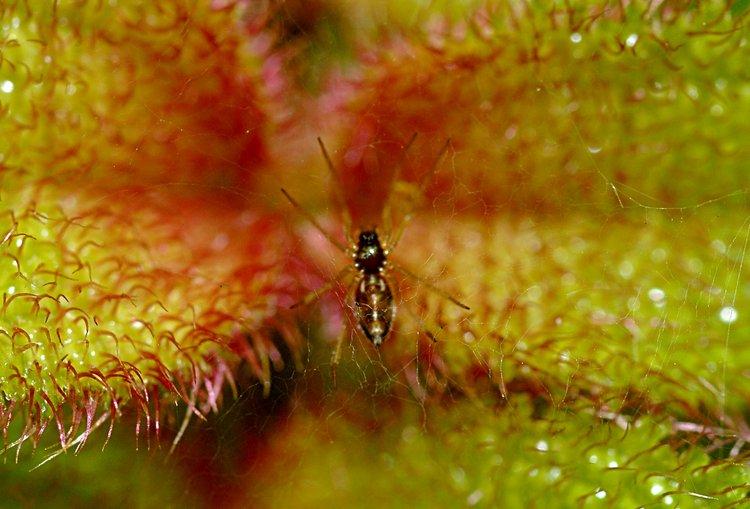 jan_13_4077_spider_plant.jpg