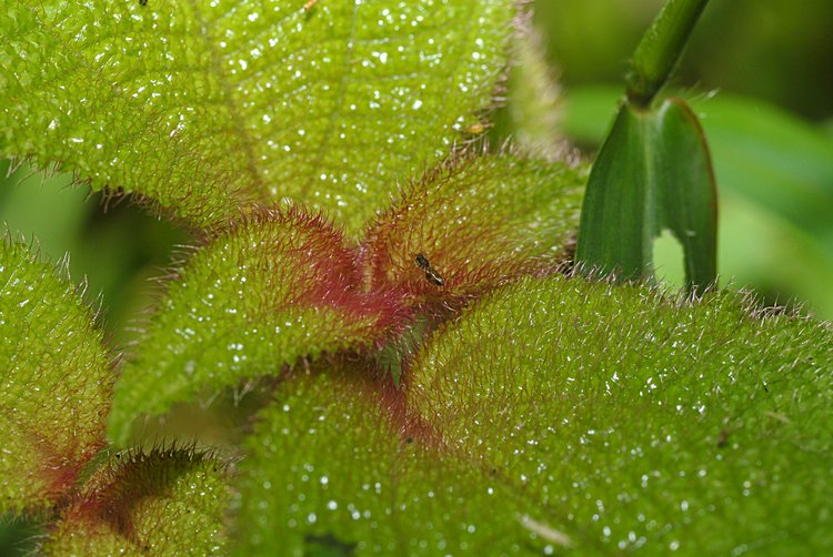 jan_13_4090_spider_plant_full.jpg