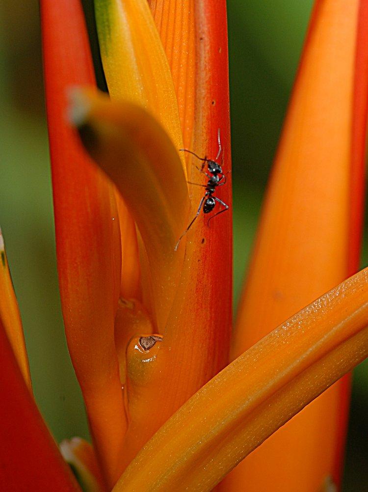 jan_13_4268_ant_orange.jpg