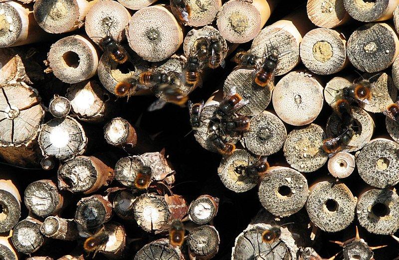 mar_11_0073_bees.jpg