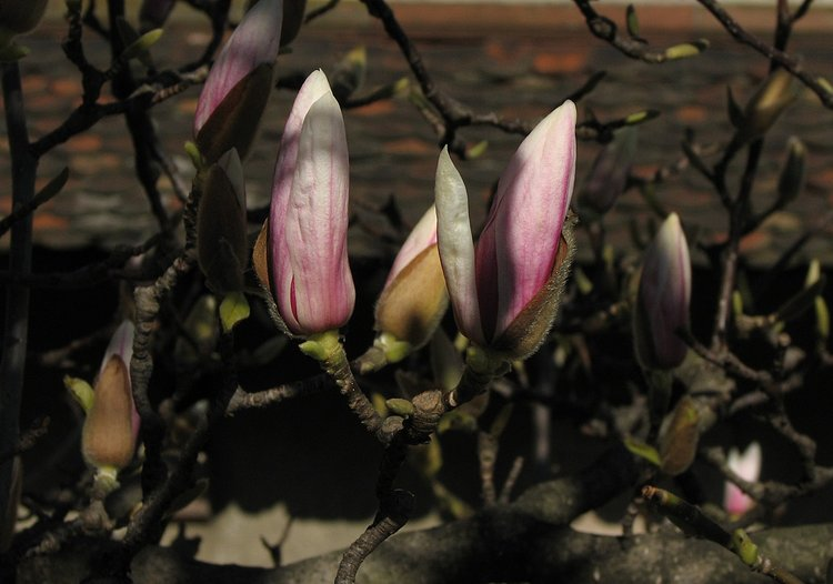 mar_12_0201_spring_almost.jpg