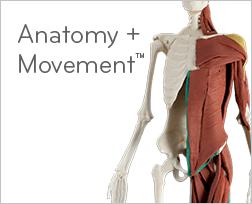 Anatomy + Movement product photo