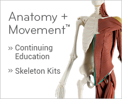 Anatomy + Movement product photo