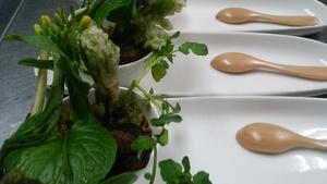 信州の旬の野菜、野のものを盛り合わせた芽吹きのサラダ