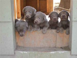 Puppies in Mississippi