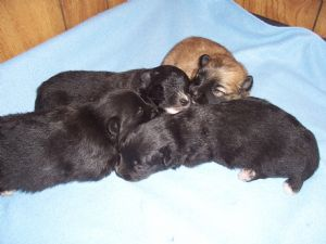 Small Breed Dogs For Sale In Fayetteville Nc