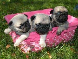 Puppies In Rhode Island