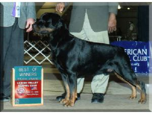 Rottweiler Puppies In Pennsylvania
