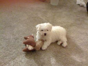 Petsmart Dog Adoption Raleigh