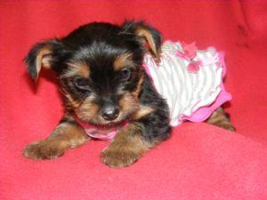 Dogs For Adoption Layton Utah