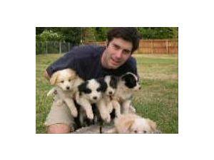 Border Collie Puppies In California