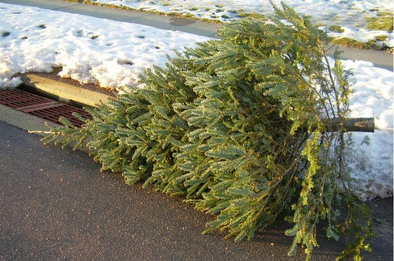 poll when do you take your christmas decorations down - When Do You Take Down Your Christmas Tree