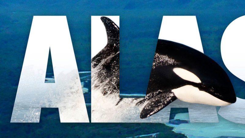 Wild Alaska PBS