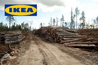 Tell IKEA to stop clear-cutting Russia's ancient forests.
