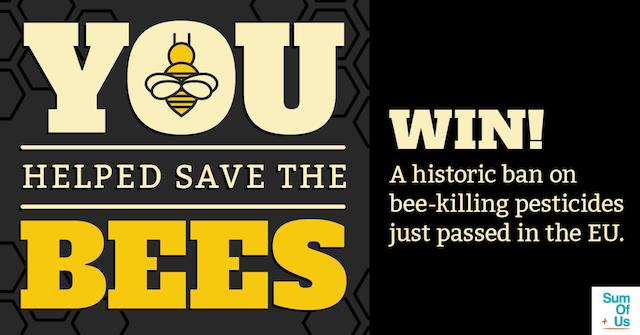 Win graphic: You helped save the bees!