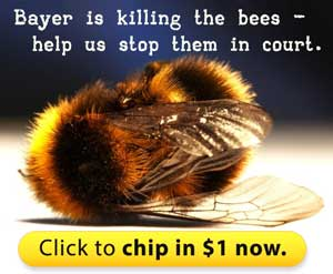 Bayer is suing Europe to overturn the ban on bee-killing pesticides -- so we're joining the legal battle to stop them.