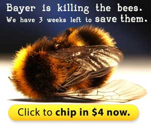 Bayer is killing the bees. We have 3 weeks left to save them.