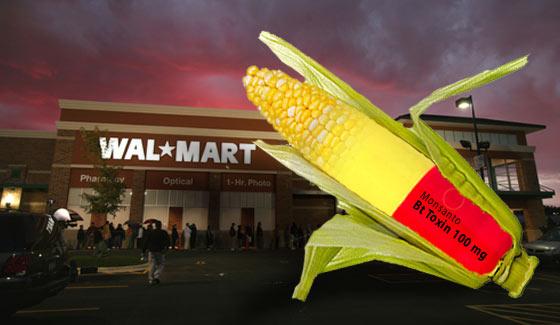 Monsanto GMO corn