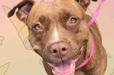 Florida_Miami_Dog_Adoption_Pet_Rescue_Adopt_A_Dog_Broward_Fort_Lauderdale