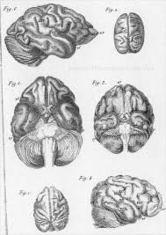 Comparative Neuroanatomy