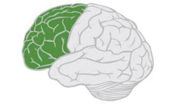 Language was localized to a region in the left frontal lobe