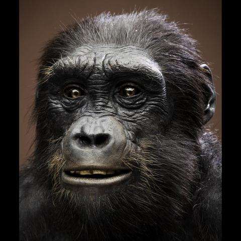 Sahelanthropus Tchadensis Fossil is Discovered
