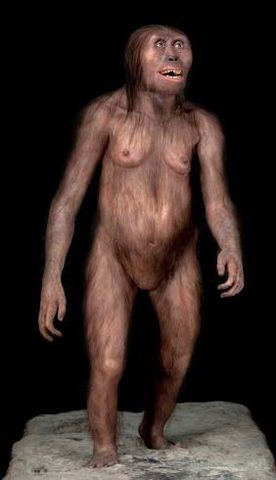 """Australopithicus afarensis """"Lucy"""""""