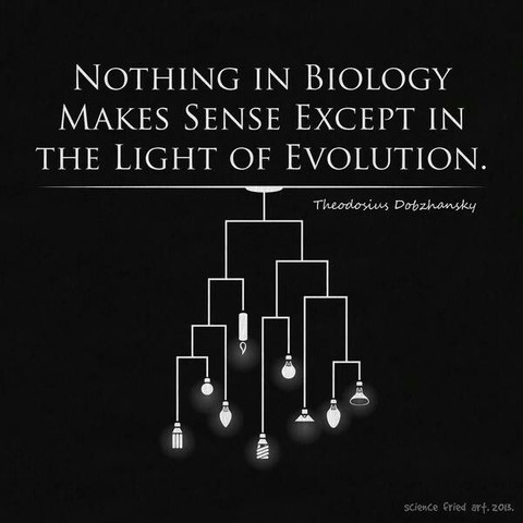 """Theodosius Dobzhansky publishes """"Nothing in Science Makes Sense Except in the Light of Evolution"""""""