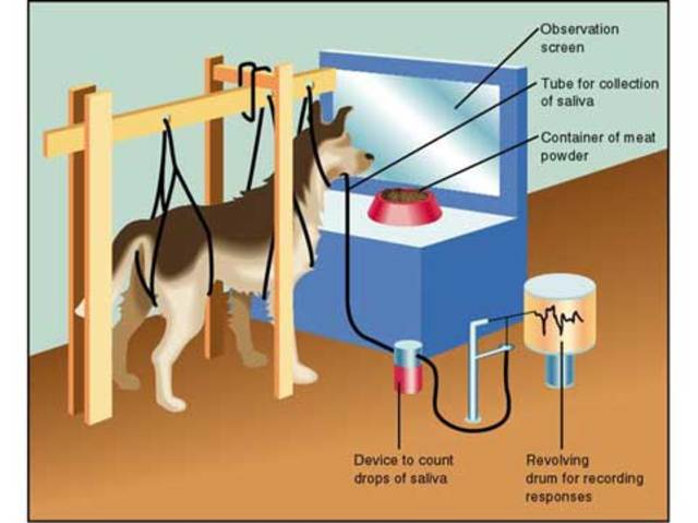 Published Classical Conditioning Studies