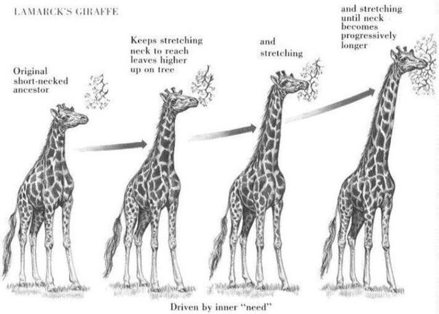 Lamarck Developes hypothesis of evolution by means of Acquired characteristics