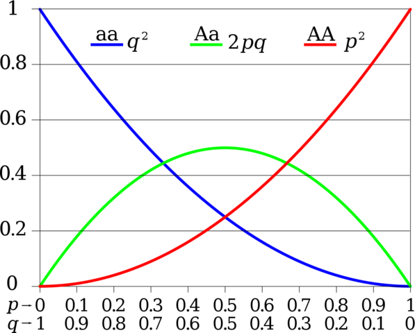 Hardy and Weinberg independently developed the Hardy-Weinberg equation for determining