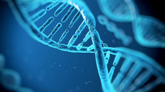 Avery MacLoed and McCarty determine that DNA is the molecule that carries the genetic code