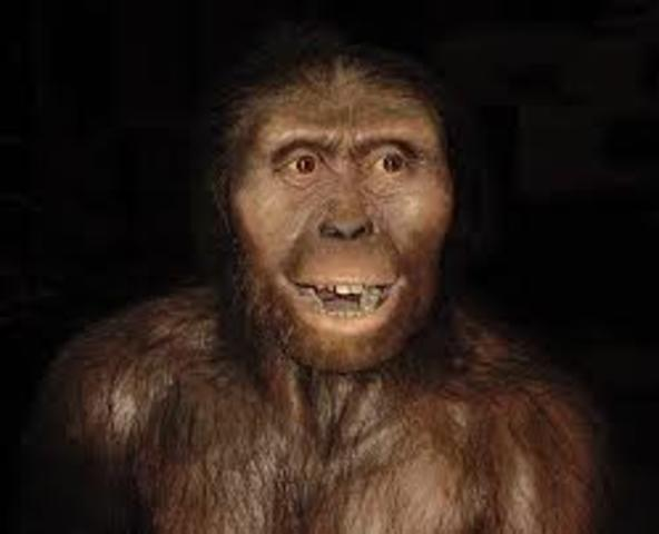 Australopithecus Afarensis is discovered