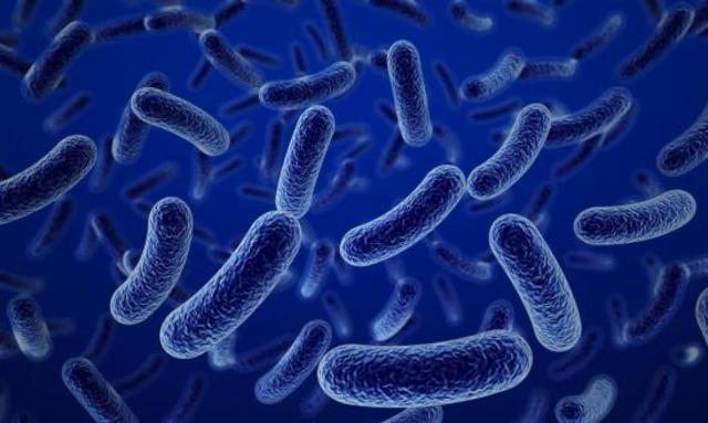 apareceron as primeiras bacterias